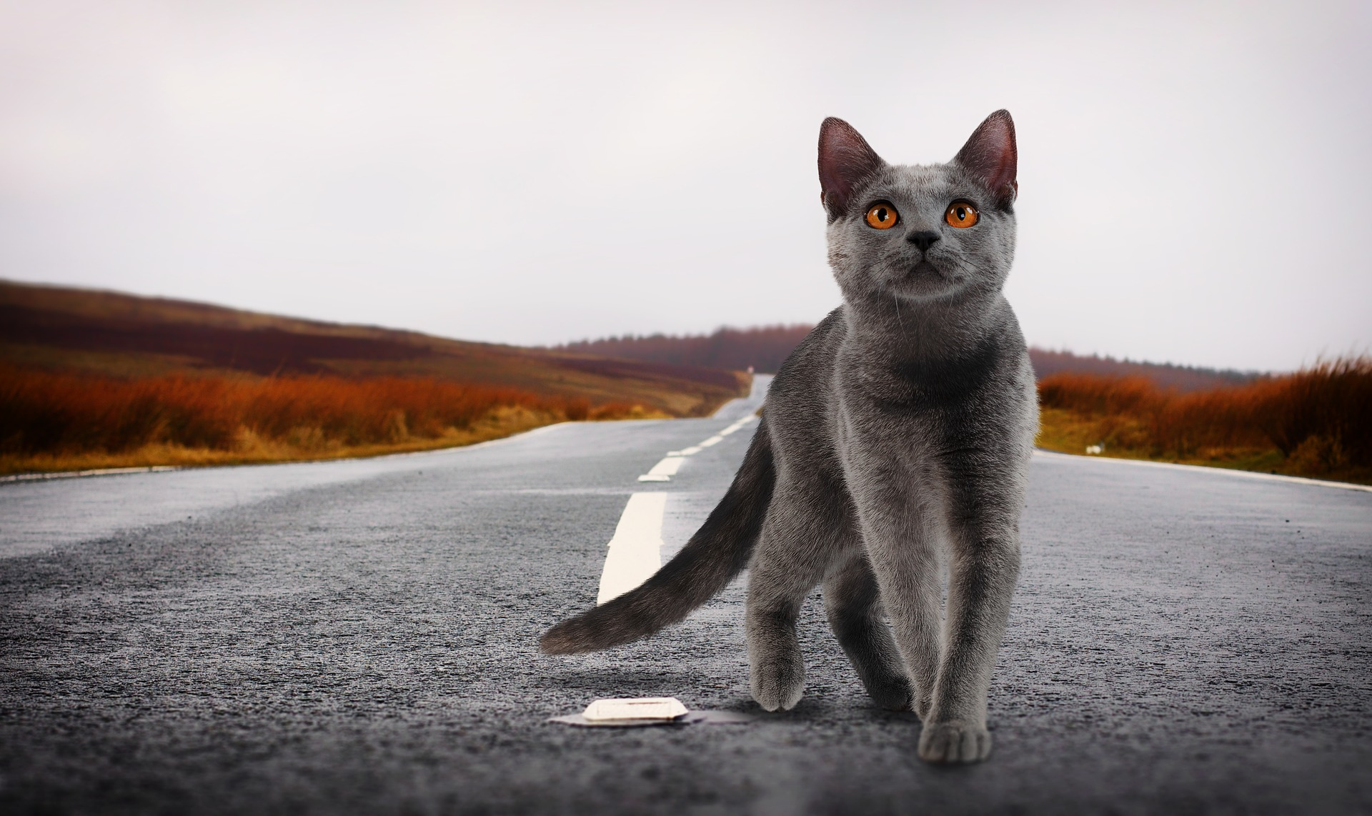 cat-2988354_1920